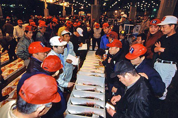 鮮魚市場せり状況