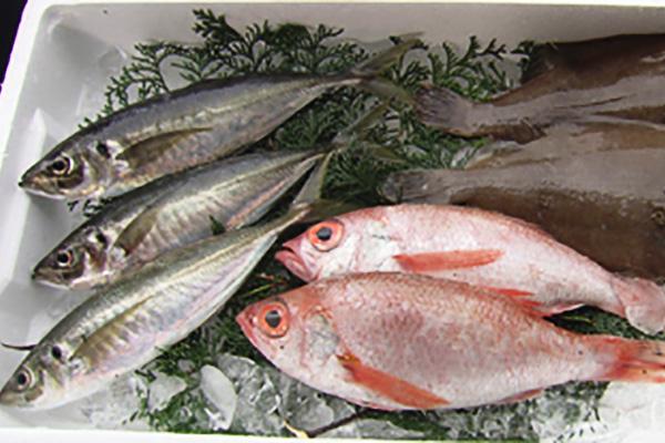 「どんちっち三魚」アジ・ノドグロ・カレイ
