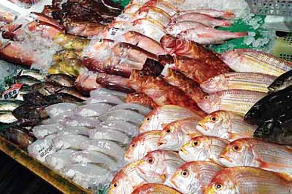 福岡の新鮮な魚