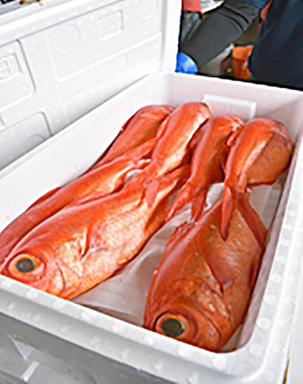 銚子水産まつり