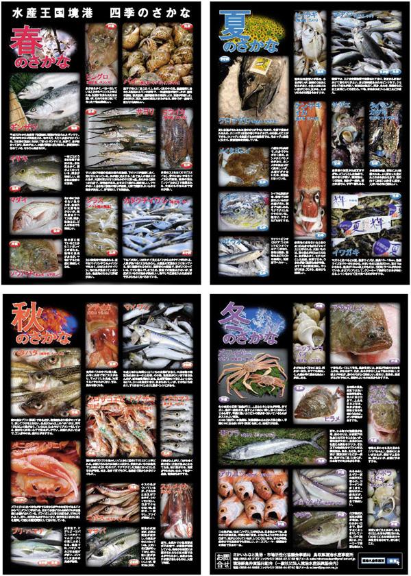 境漁港で水揚げされる主要な魚を紹介
